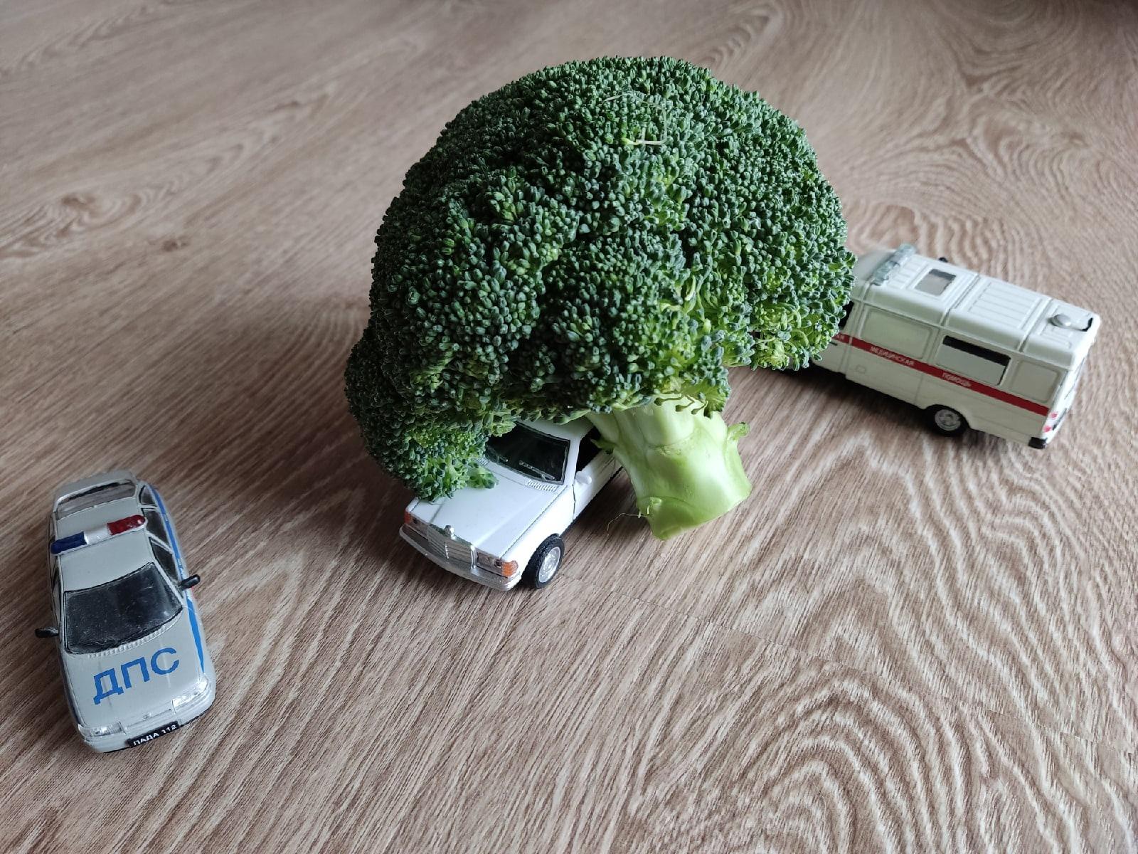 Топовый автоюрист: как возместить ущерб от упавшего на машину дерева