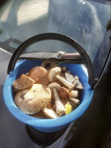 Жители Тверской области рассказали, где самые грибные места