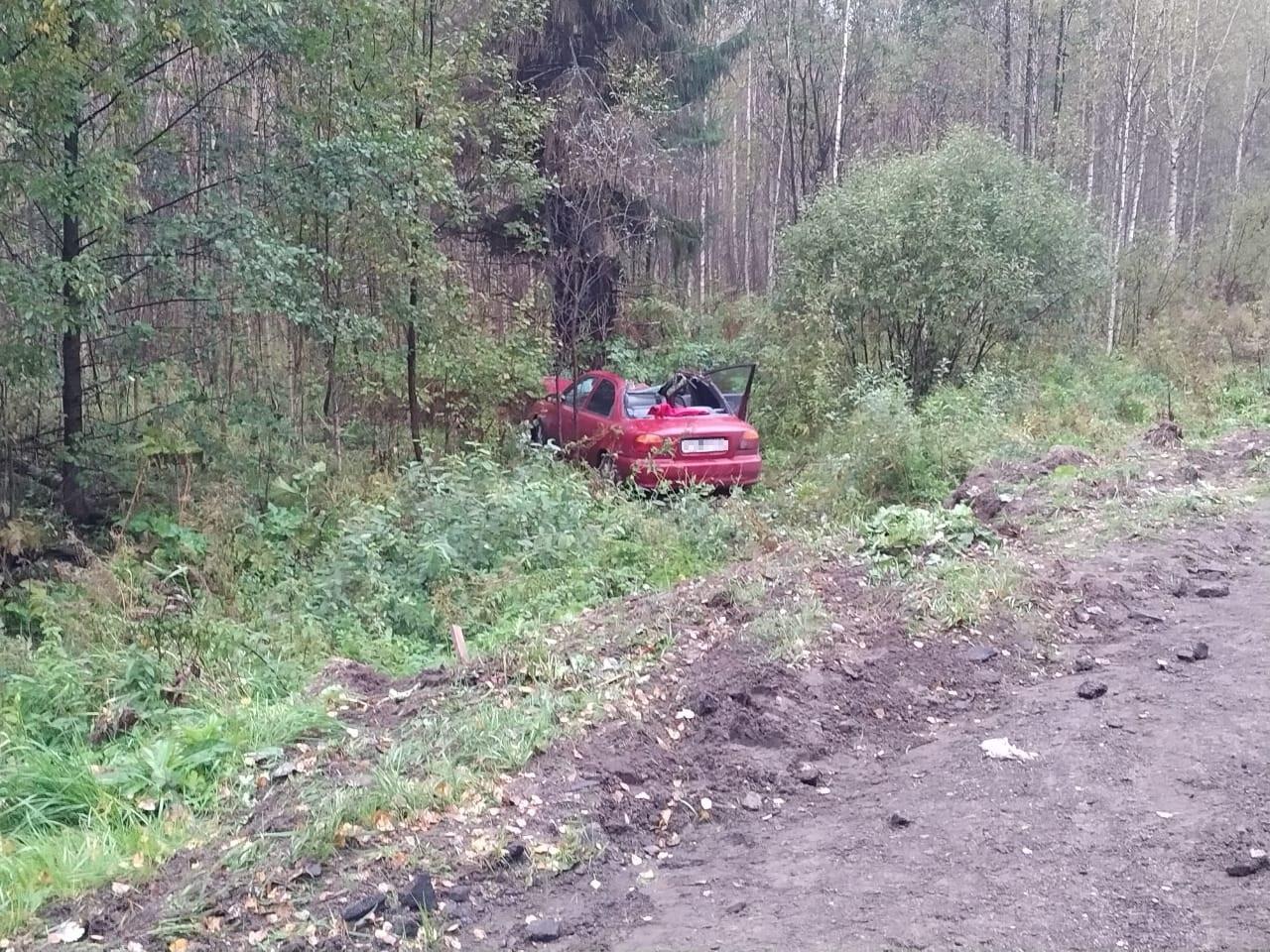 Молодой водитель иномарки сбил лося в Тверской области