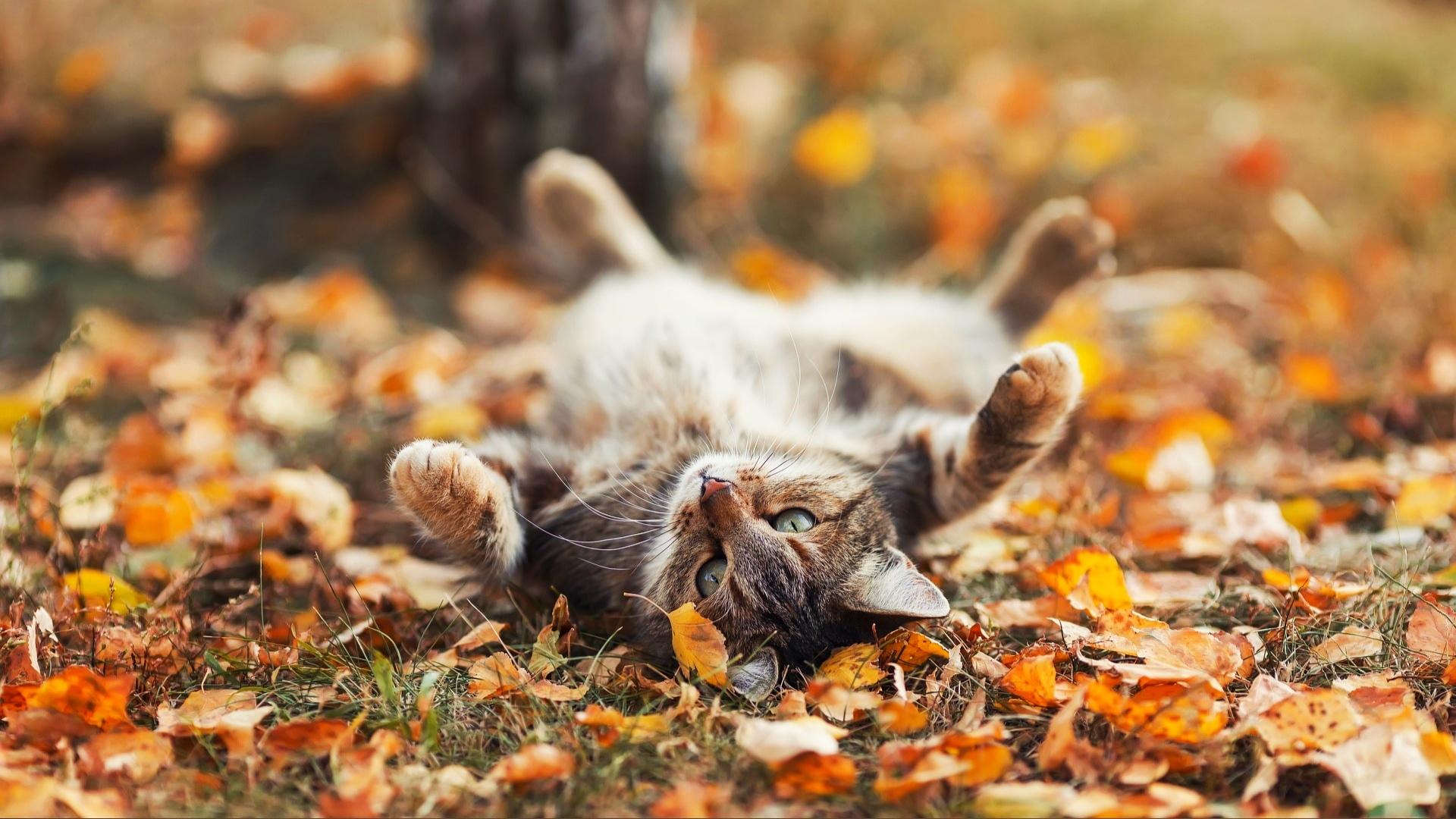 Стало ясно, ждать ли потепления на выходных в Тверской области