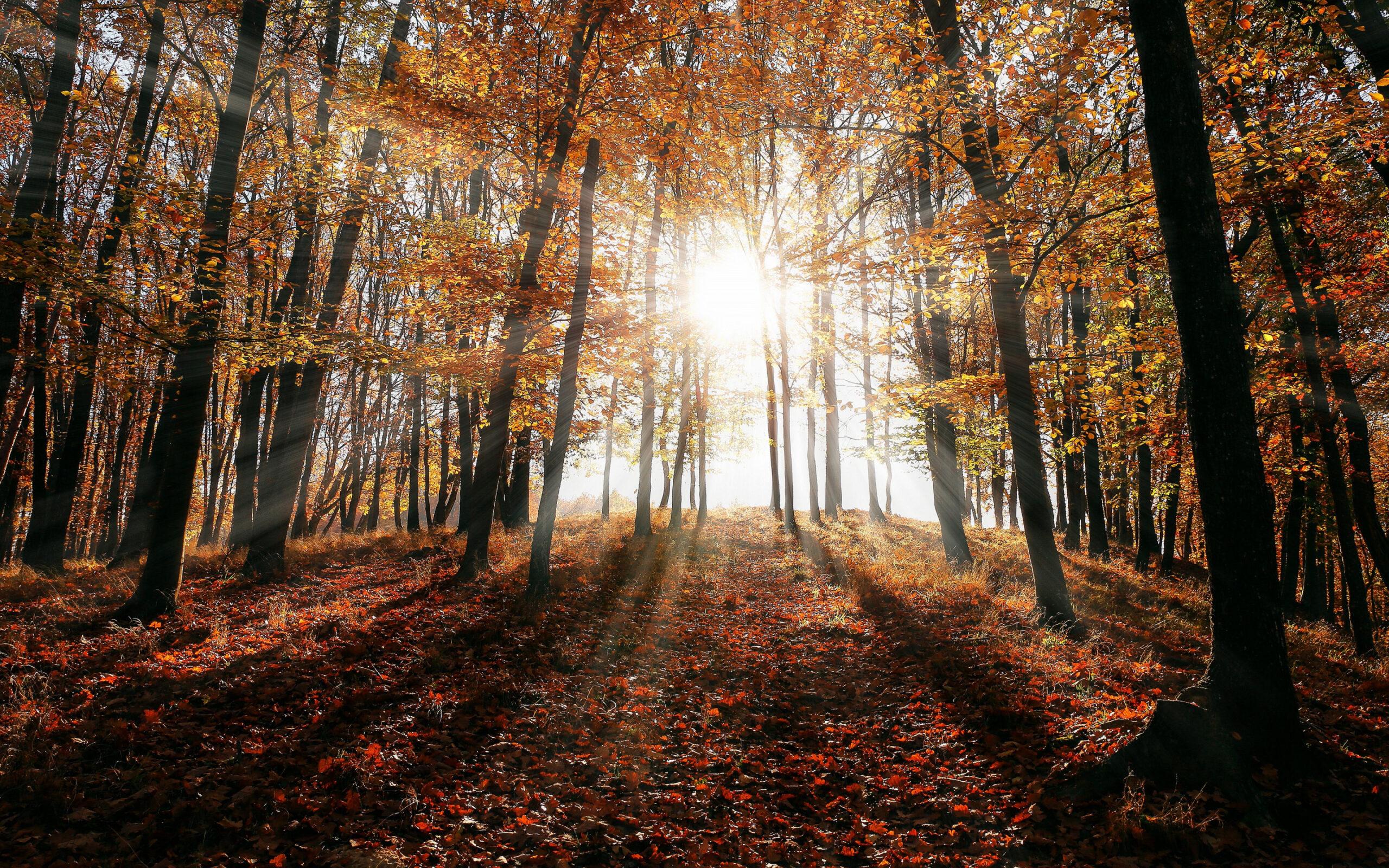 Синоптики назвали последний тёплый день осени в Тверской области