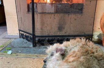Собака, которая спасла детей в Тверской области, выжила