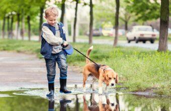 Районную власть в Тверской области наказали за домашних животных