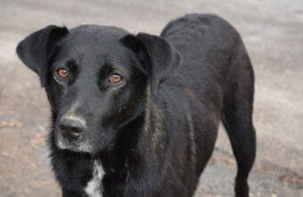 Собаку-подкидыша забрали в приют Тверской области