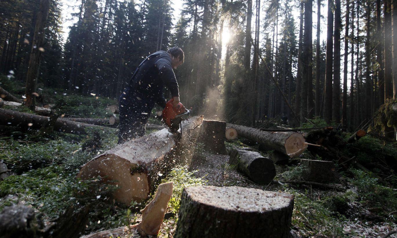 Мужчина из Тверской области нарубил государственной зелени почти на полмиллиона