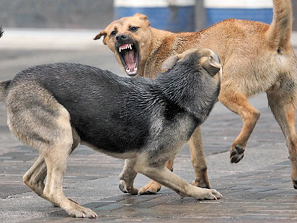 Слабонервным не смотреть: свора бездомных собак напала на ребёнка в Твери